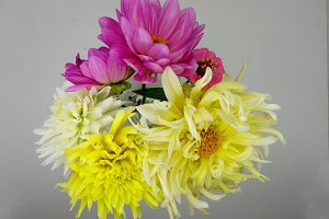 Delicate bouquet of dahlias