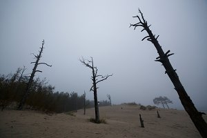 dead dry forest ecology problem