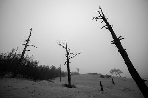 Dark silhouette of dead dry forest. Ecological, life concept