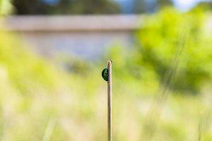 Small bug on plant macro photo