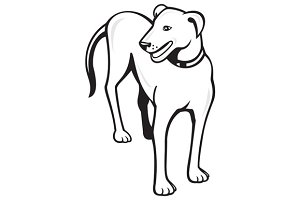 Dog Standing Front Cartoon
