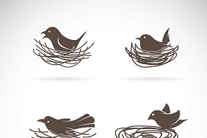Vector of Bird and Nests.