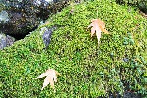 Autumn leaves change color