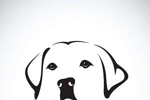 Vector of a dog head. Labrador