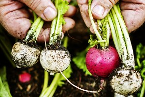 A person handling beets