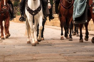 Horses riding