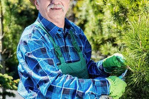 Senior gardener cutting a tree in a garden.