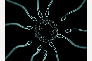Sperm and egg cell microscopic