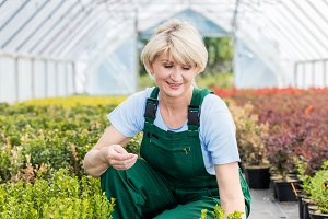Attractive mature gardener working in a greenhouse.