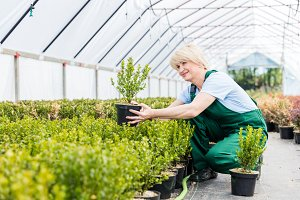 Attractive woman gardener working in a greenhouse.