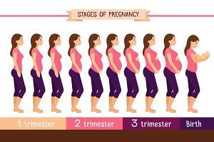 Pregnancy stages flat illustration