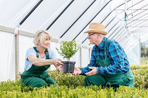 Gardeners working together in a greenhouse.
