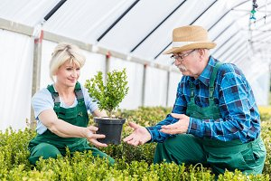 Gardeners selecting the finest plants in a greenhouse.
