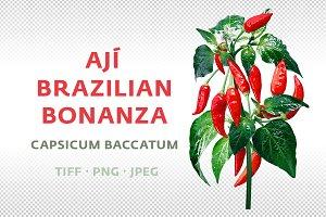Ají Brazilian Bonanza