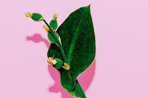 Minimal art. Exotic Plant on pink.