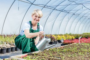 Attractive mature gardener watering plants in a greenhouse.