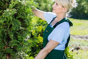 Mature woman gardener selecting a tree.