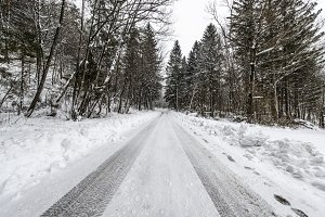 Winter Forest Road / Path