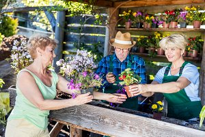 Attractive mature woman choosing potted flowers.