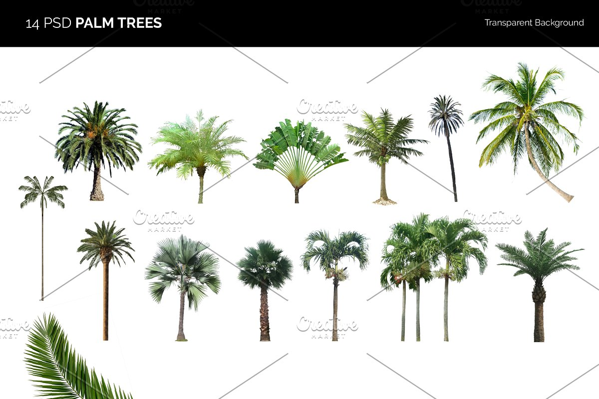 14 Psd Palm Trees