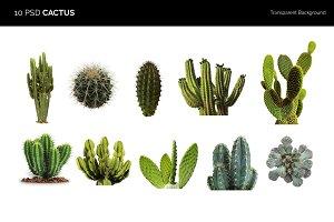 10 PDS Cactus