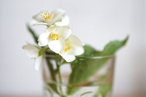 A sprig of jasmine in a glass with water on a wooden table