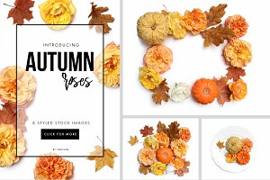 Autumn roses flat lay stock photos