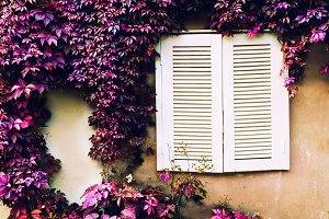 White shutters on the window