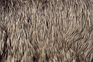 Ostrich texture