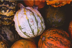 Background of white, orange and green small pumpkins. Autumn harvest concept.