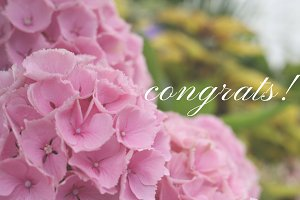 Congrats! Graphic
