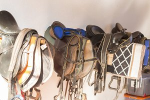 Wall of saddlery filled
