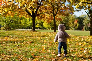 Little child in the autumn forest