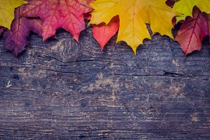 Autumn background with fall leaves