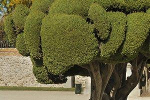 Parterre gardens of Madrid