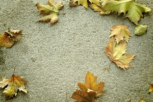 autumnal background, cement and dry