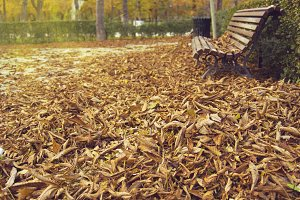Park with dry leaves, fall season, u