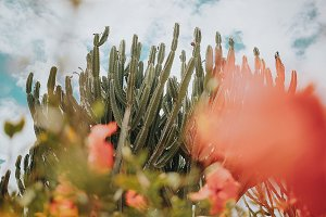 large group of cacti with flowers