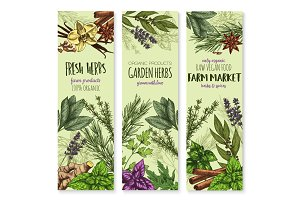 Vecor sketch banners of spices and herbs