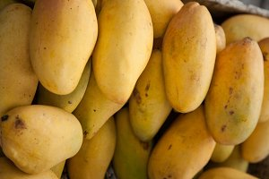 Ripe mangoes.