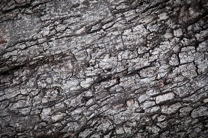 surface of the bark.