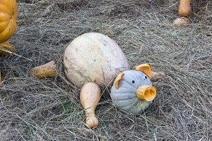 Piglet made from ripe pumpkins.