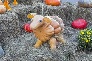 Sheep made from ripe pumpkins.