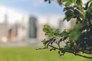 NYC Plants