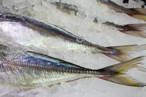 detail of fish, Ice fish market