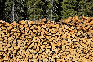 A big pile of spruce wood