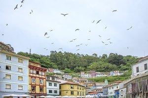 Seagulls in Cudillero