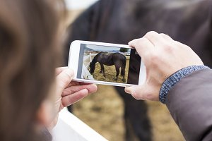 Man taking photographs a horse