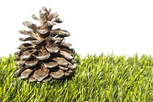 Pine cone in the grass