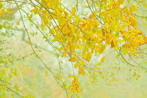 Fall Foliage in Orange and Yellow